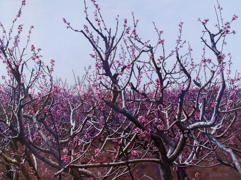 Peach Trees in blossom, Oil on Canvas, 91.2 x 122cm,  2015